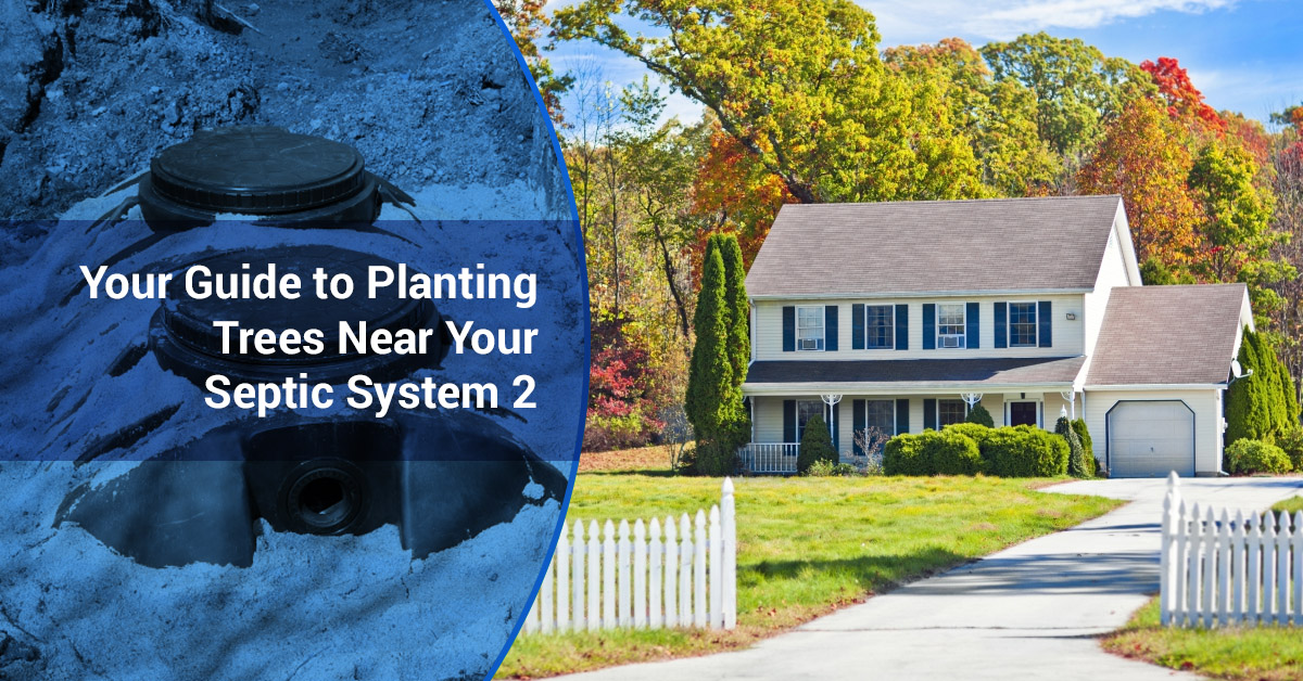 Septic Tank Care Which Trees To Plant Near Your Septic System